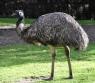 Натуральный Крем для тела Масло страуса Эму и витамин Е 250г, Австралия