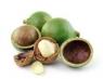 Крем для тела с Маслом ореха Макадамия+Витамин Е 250г, Австралия